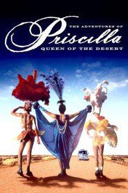 Priscilla, królowa pustyni